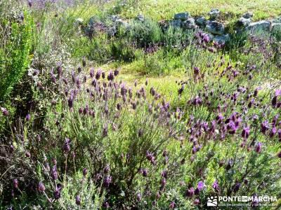 Piedra Escrita Diosa Diana; paginas de senderismo; viajes organizados fin de semana;hiking